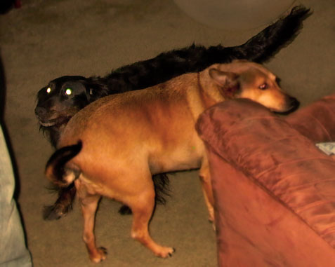 A photo of our dogs Scooby and Shaggy